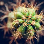 Cactus Meaning and Messages