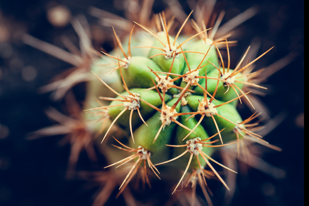 Cactus Meaning and Insights