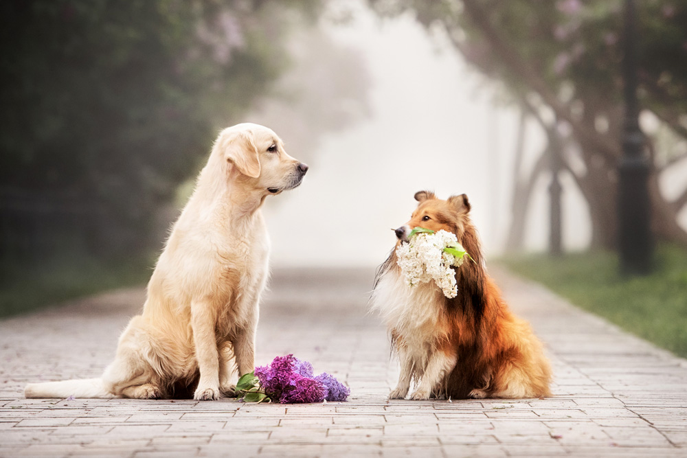 Dog Wisdom and Love Lessons