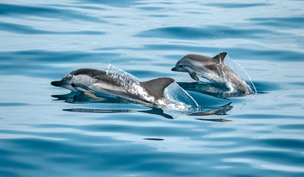 Dolphin Guides and Dolphin Connections