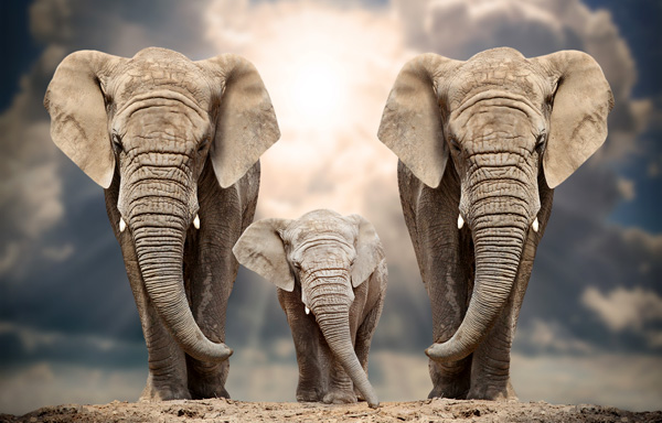 Elephant Guides