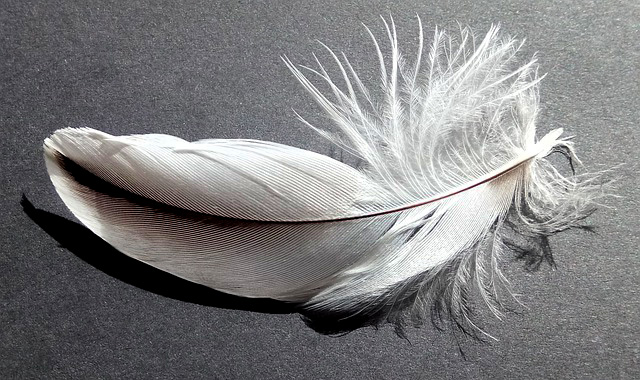 Meaning of Finding Feathers
