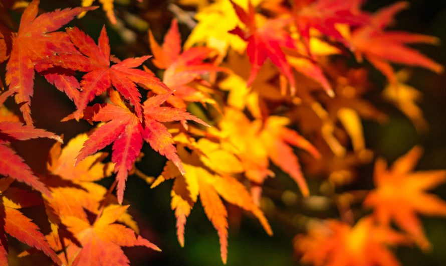 Autumn Equinox and Mabon Meaning