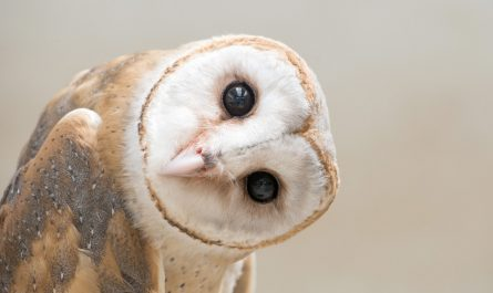 Why Are Owls Associated with Learning?