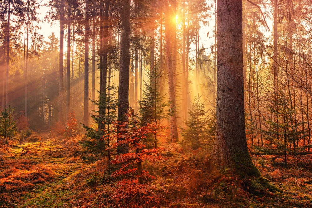 About Autumn Symbolism